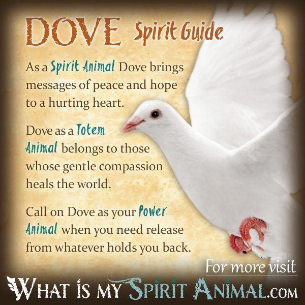 Bird Symbolism & Meaning   Spirit. Totem. & Power Animal