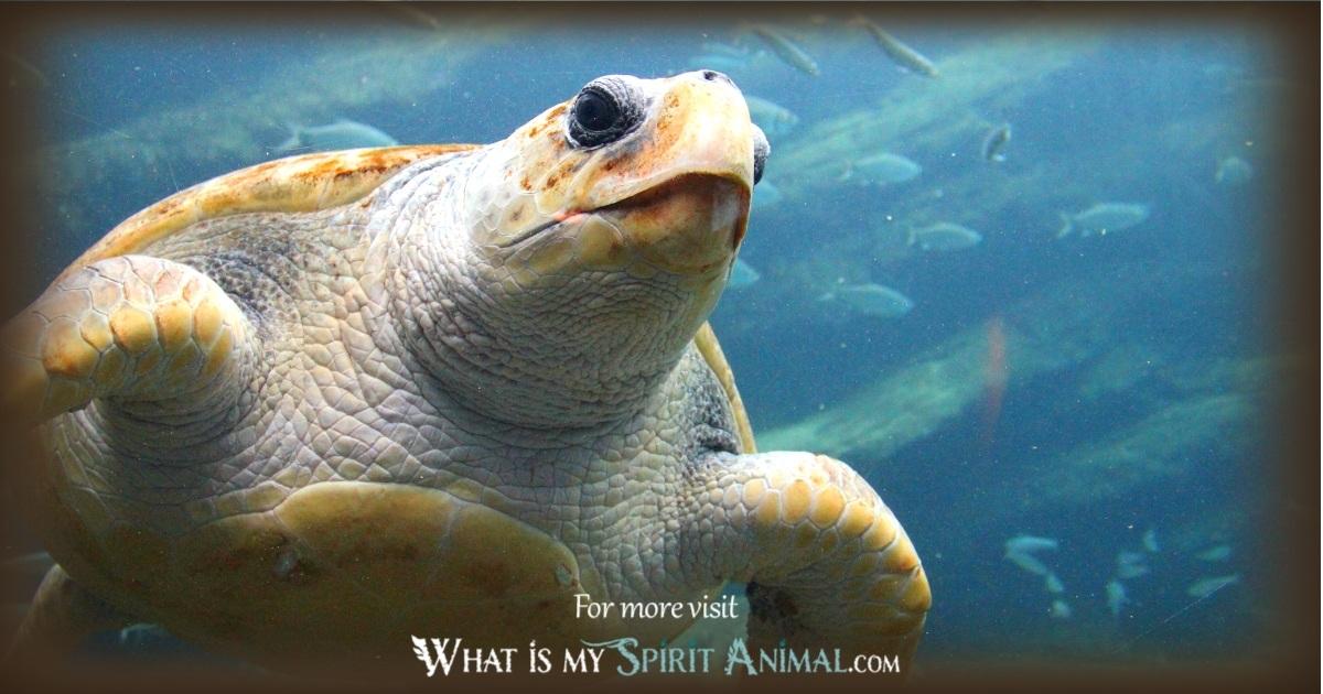 What is a Spirit Animal   Spirit Animal vs Totem Animal vs Power Animal