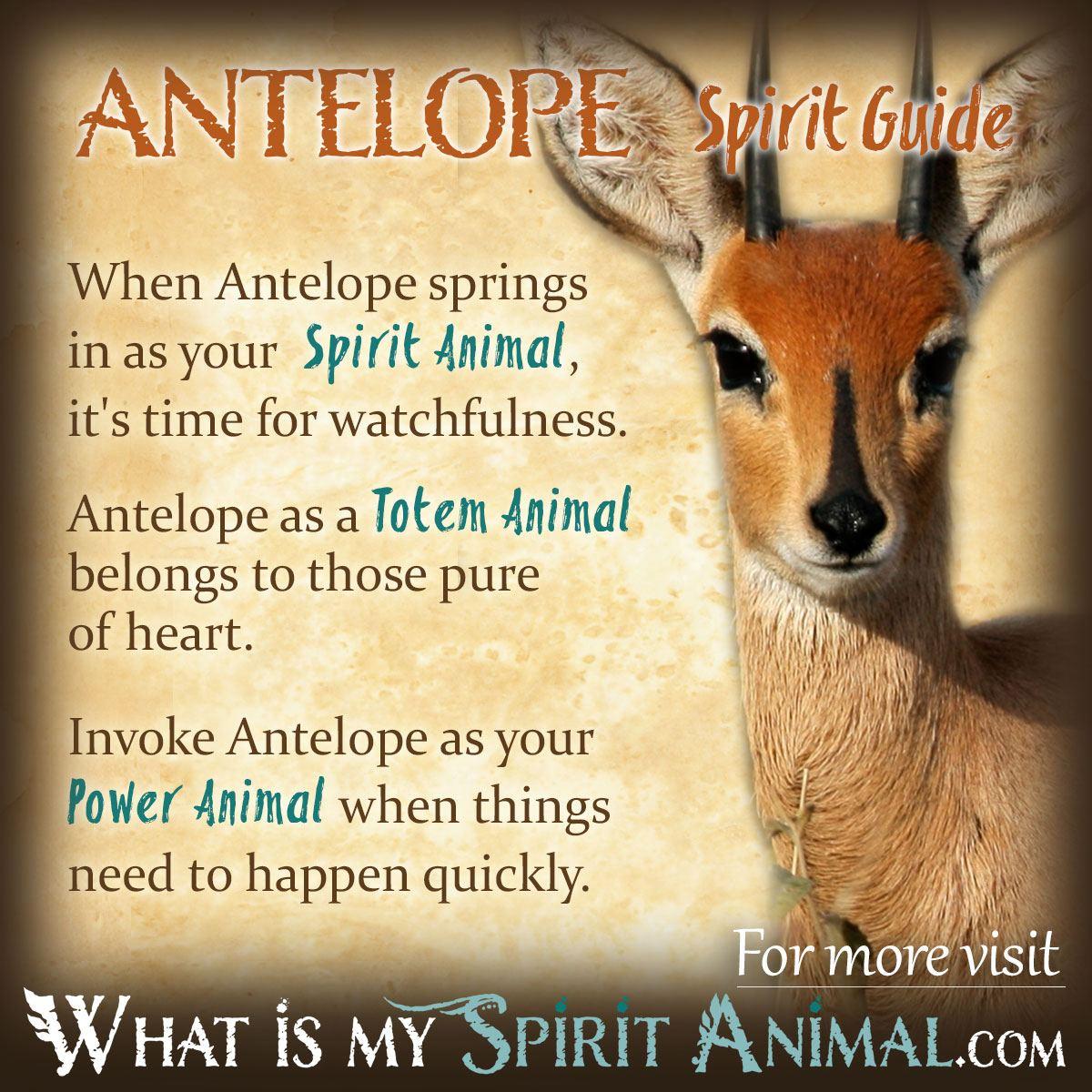 antelope symbolism meaning antelope