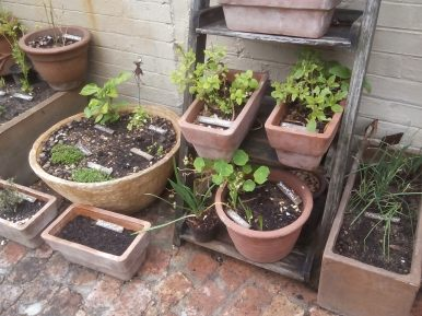 I started with Herbs in Pots