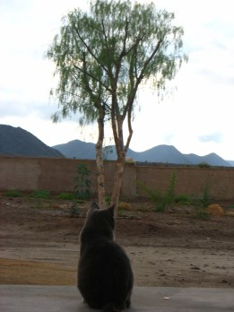 The cat. Always in Egypt