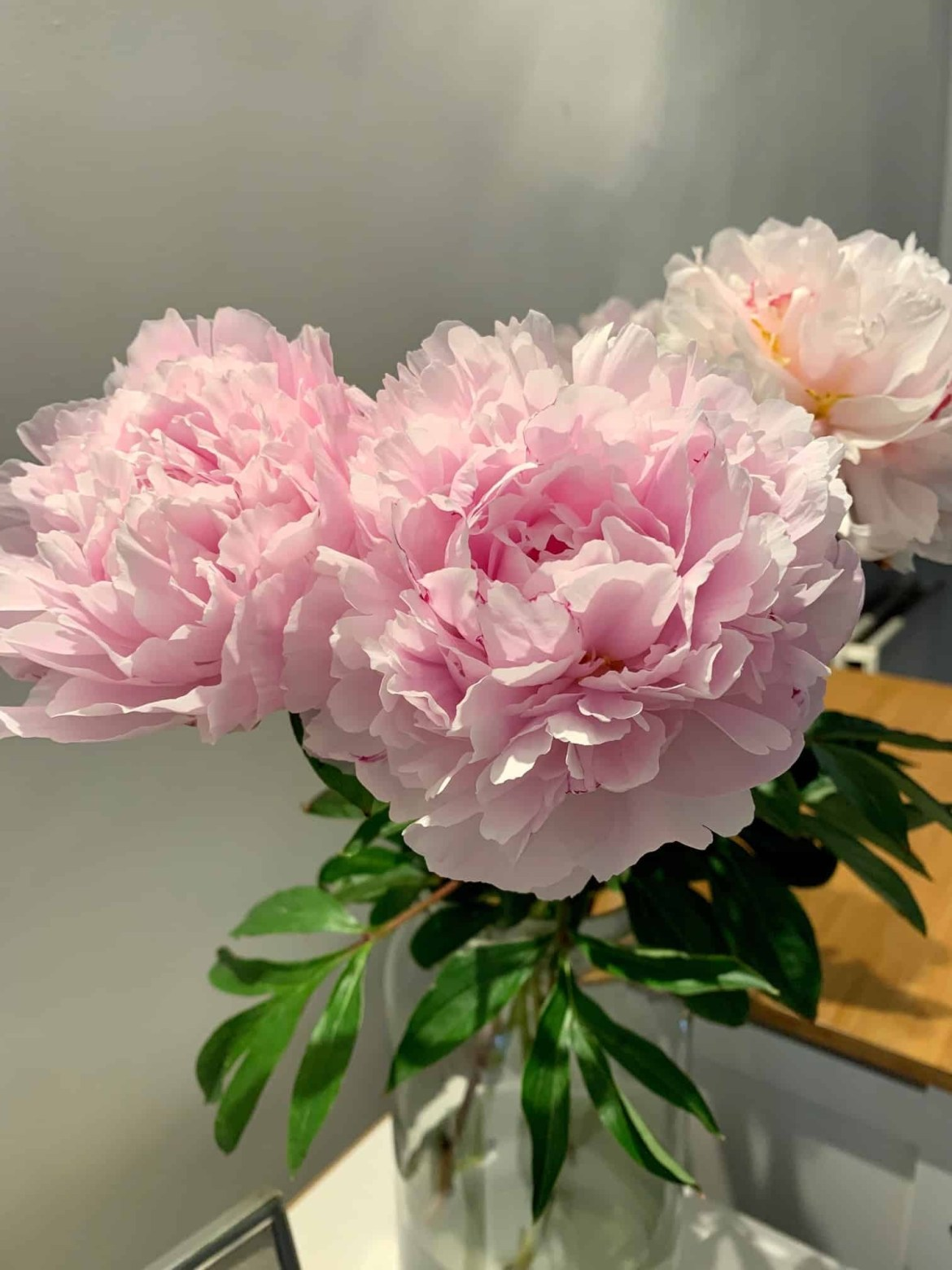 Bunch of pink peonies