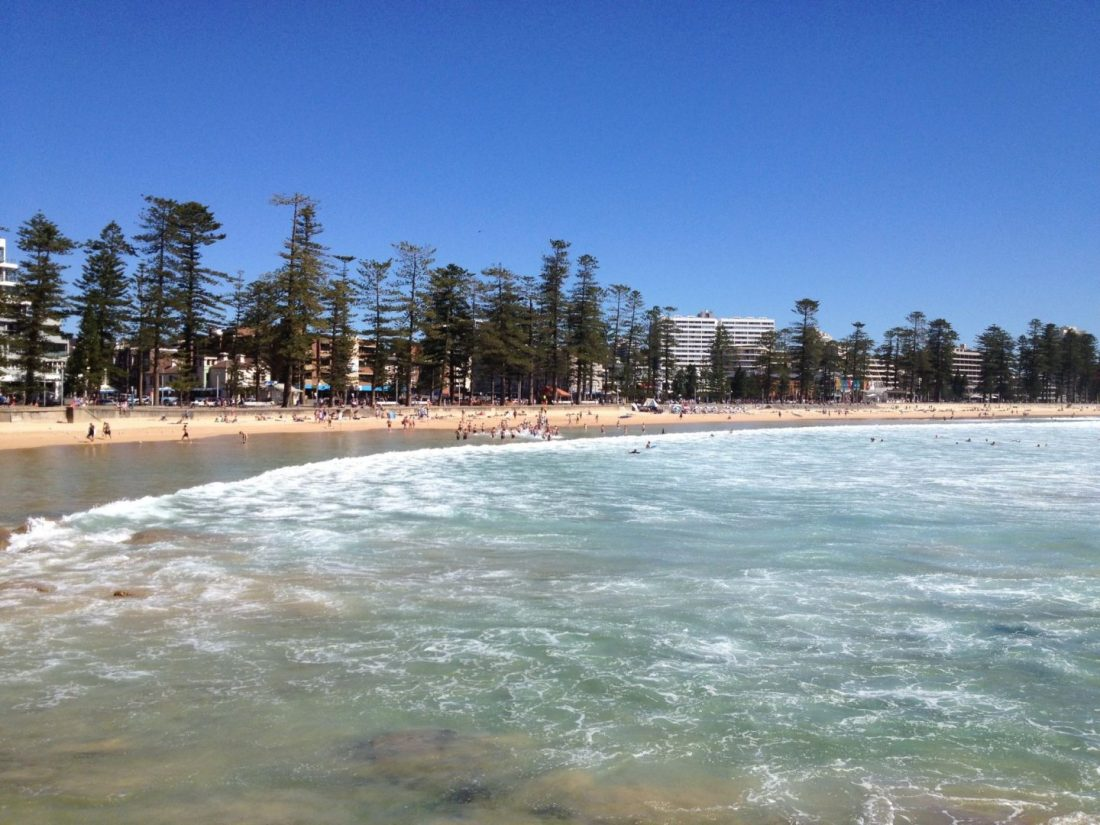Manly Beach and its famous Norfolk Island pine trees