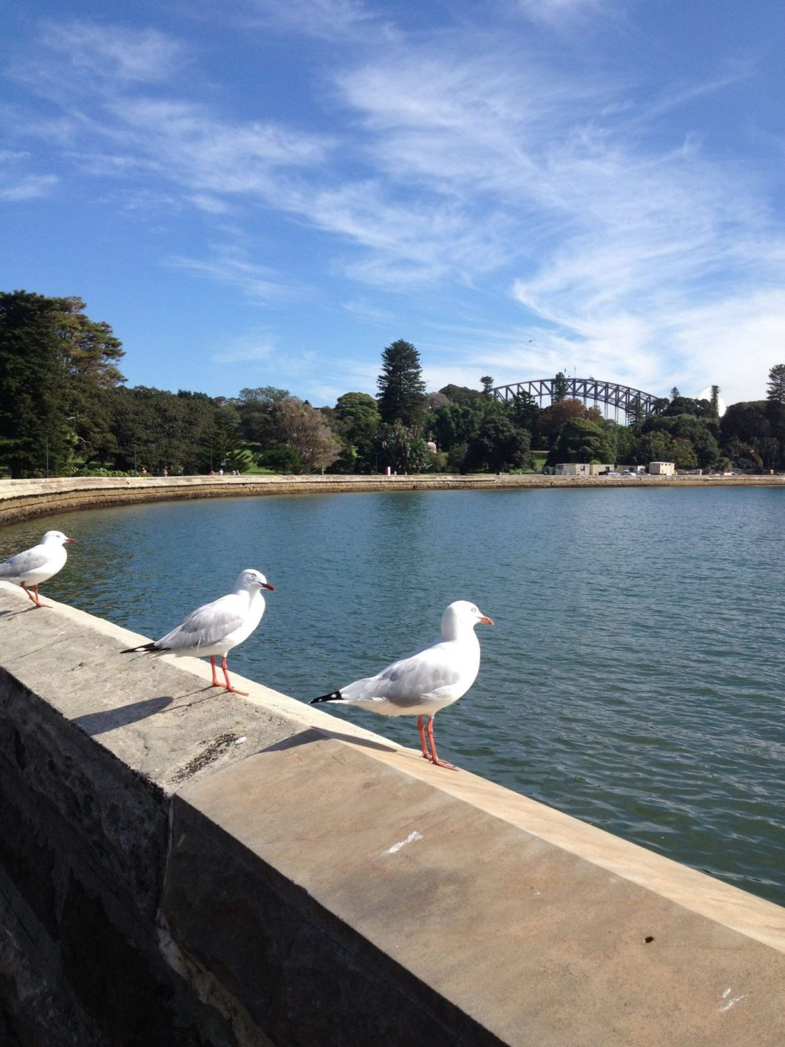 Seagulls and a view of Sydney Harbour