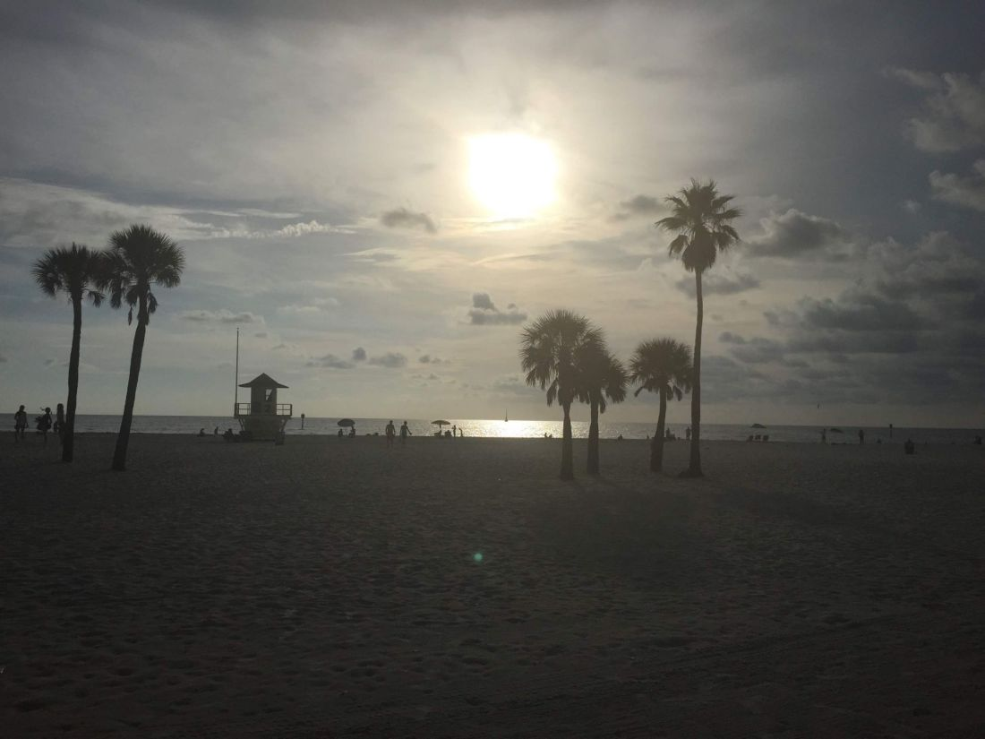 Sunset through the palm trees on Clearwater Beach