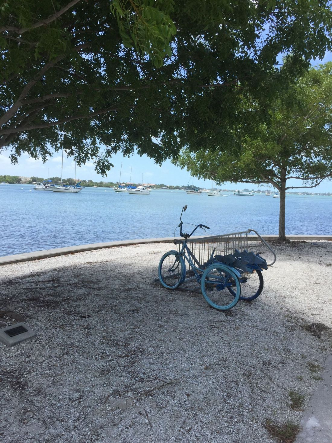 Bicycle on Sarasota Bay