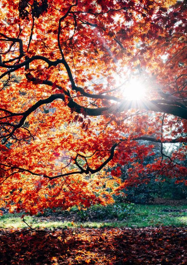 Westonbirt Arboretum in Autumn