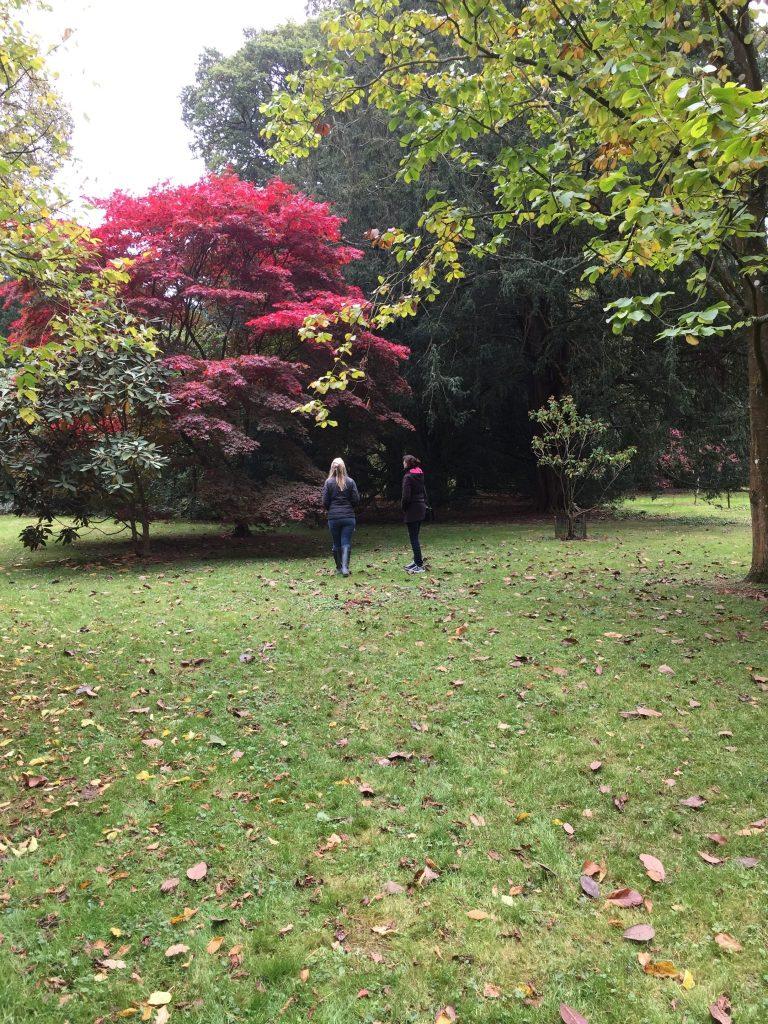 Walking in Westonbirt Arboretum
