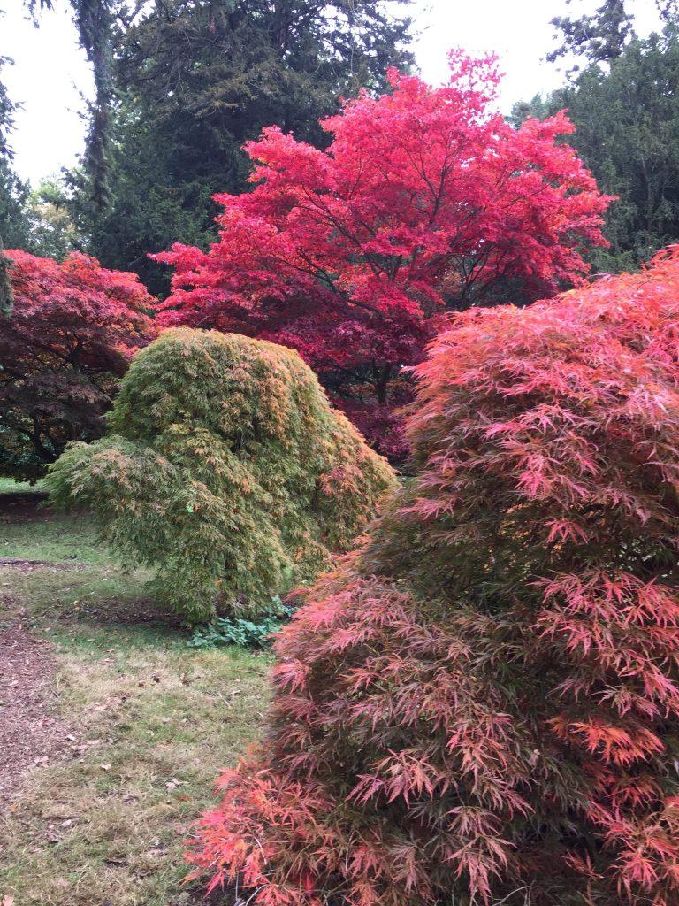 Autumn colours of Westonbirt Arboretum