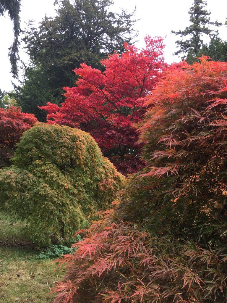 Colourful trees of Westonbirt Arboretum