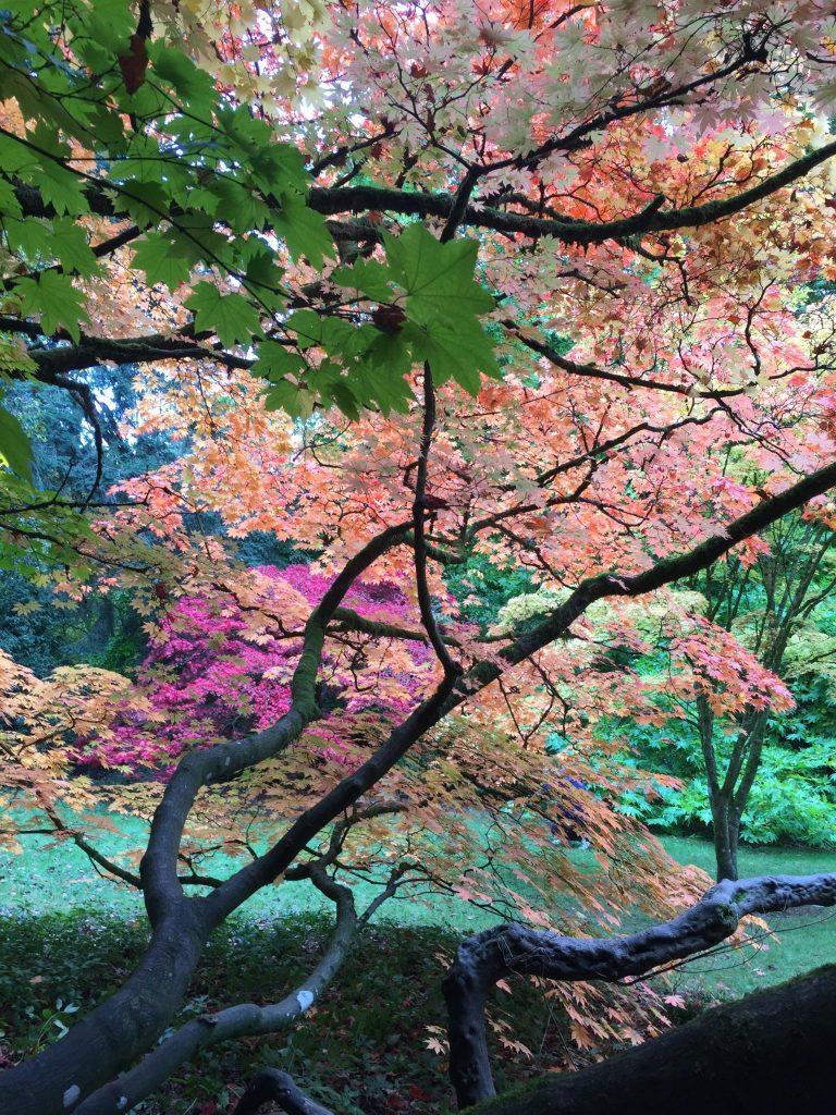 Colours of Westonbirt Arboretum in autumn