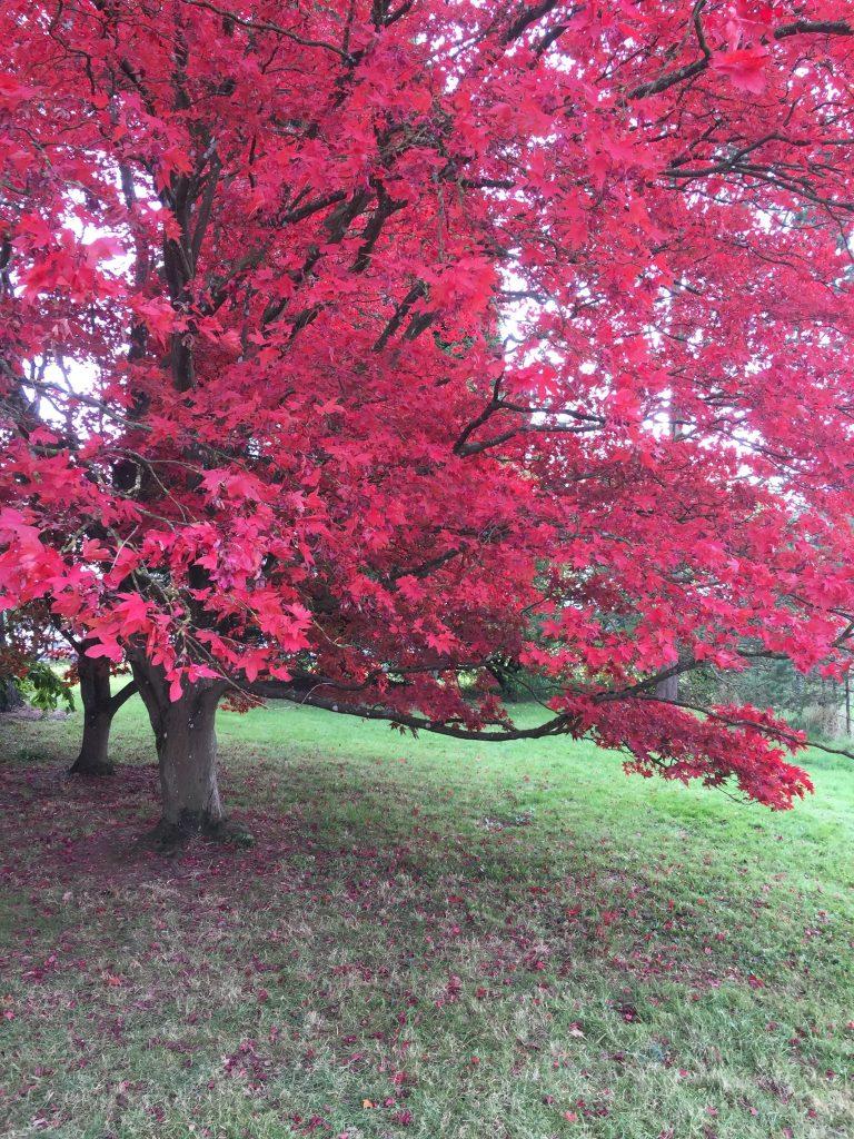 Autumn tree in Gloucestershire