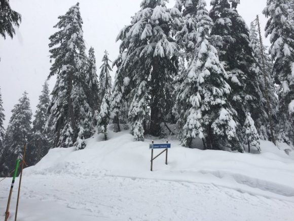 A snowshoe trail on Mount Seymour, Vancouver