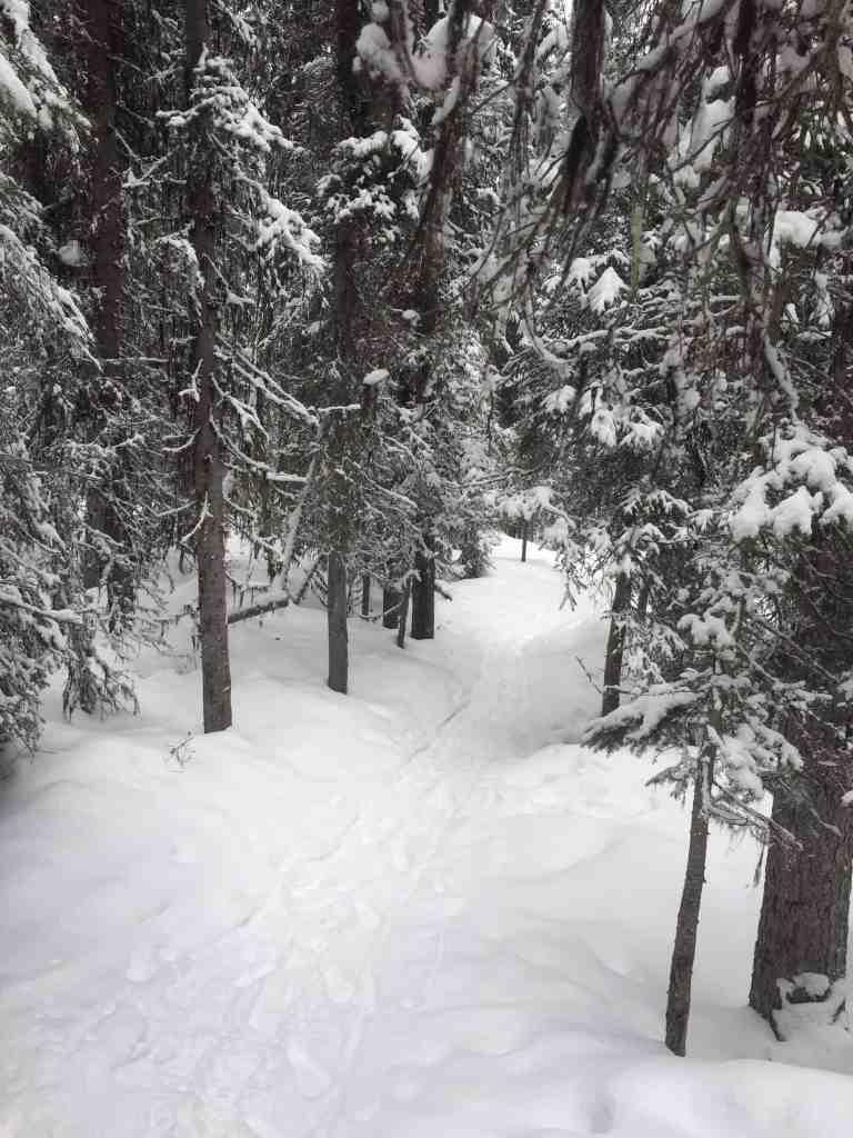 Snowy trees on a hiking trail near Lake Louise