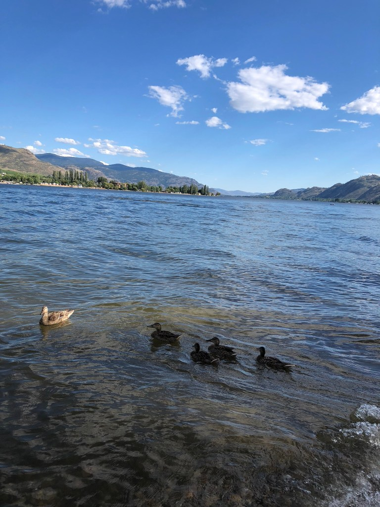 Ducks on Lake Osoyoos, Okanagan Valley