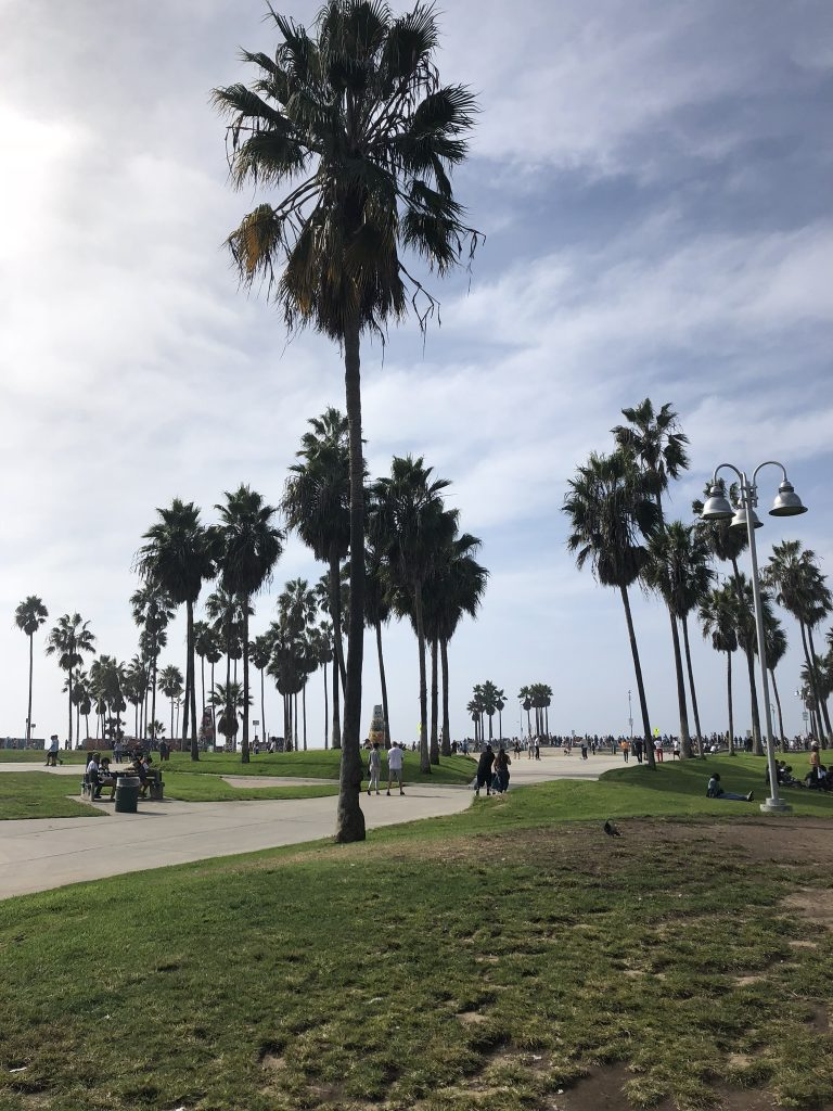 Palm trees on Venice Beach boardwalk, LA
