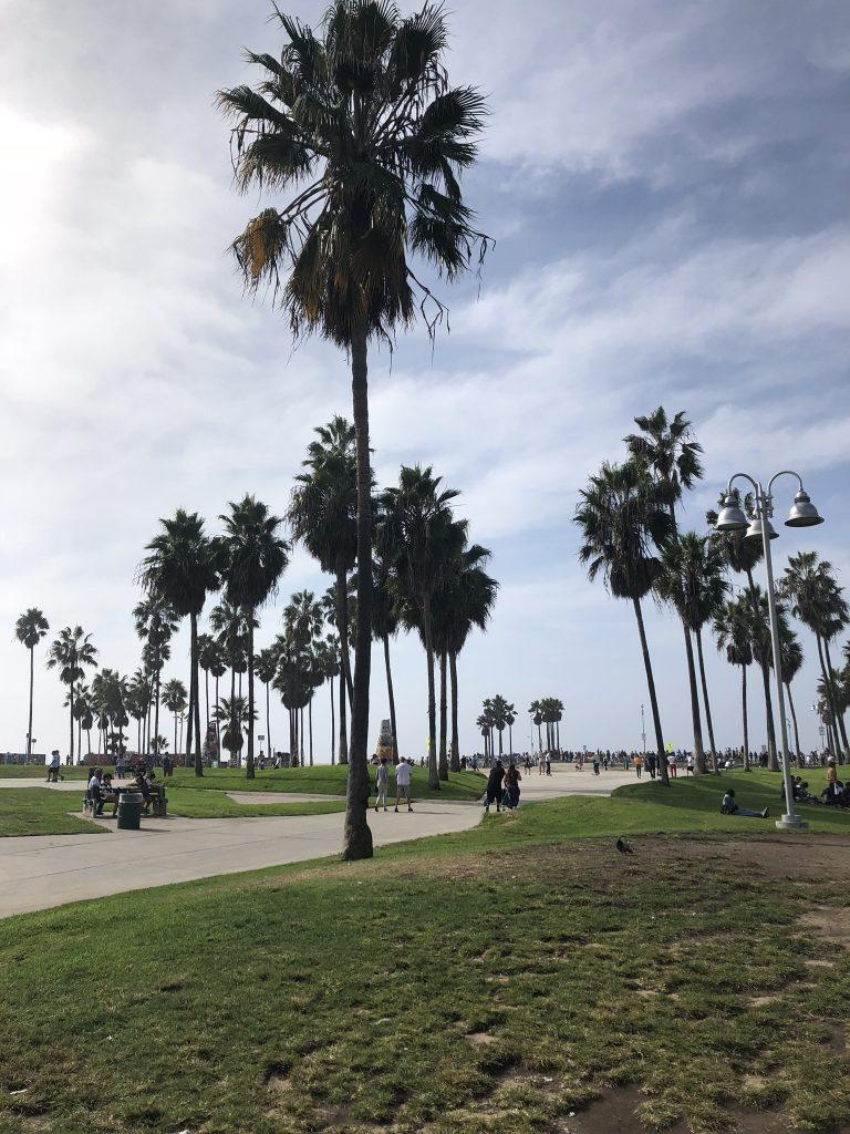 Palm trees on Venice Beach boardwalk, LA