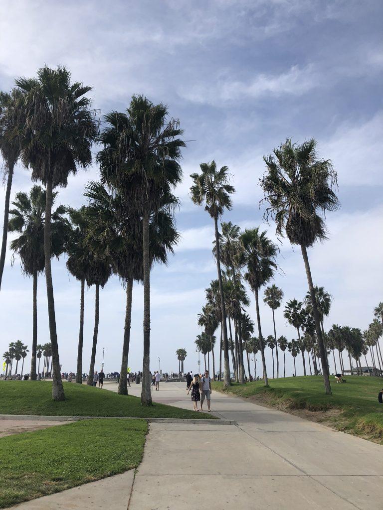 Palm trees on Venice Beach