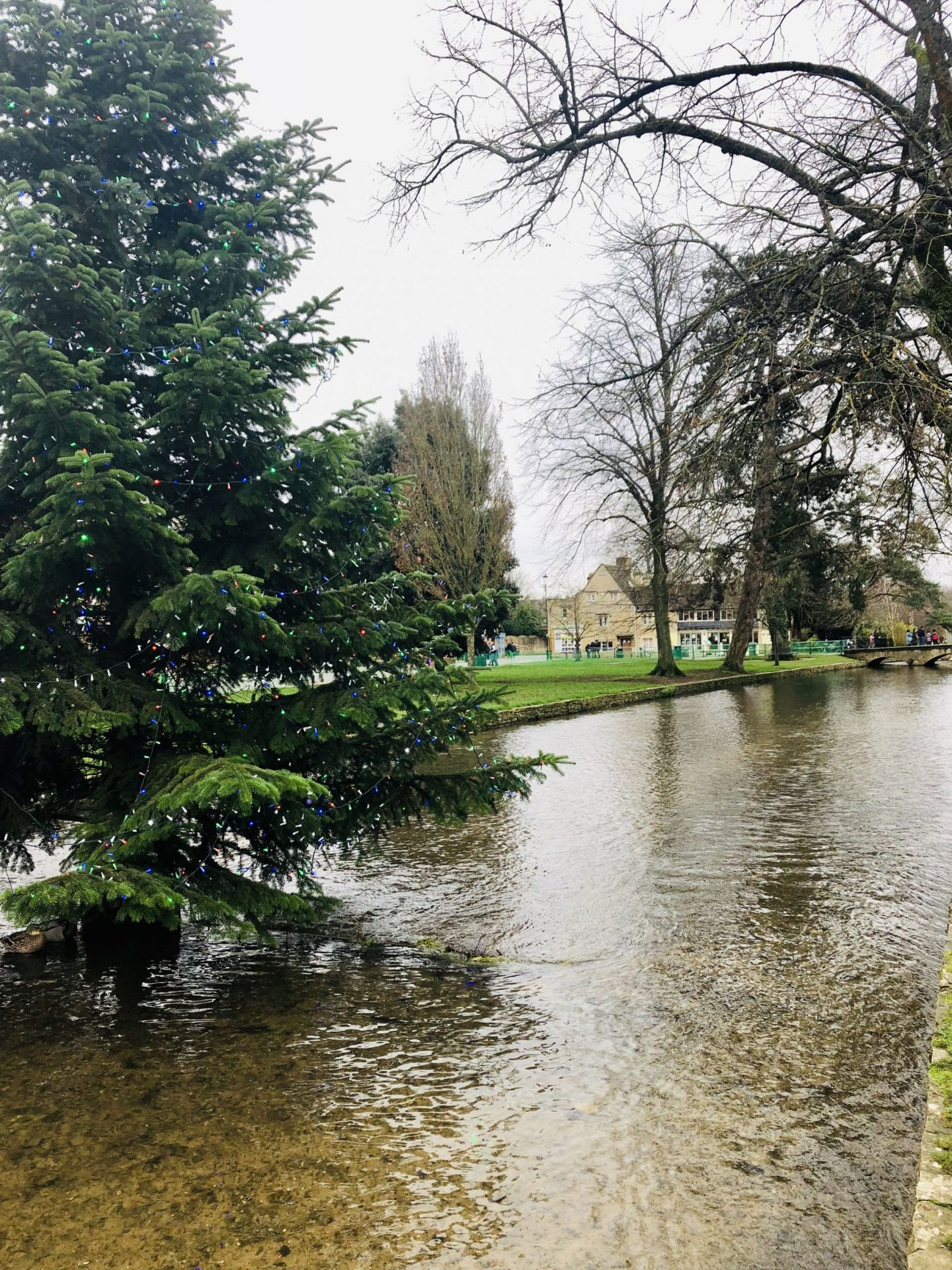 Christmas tree in Bourton-on-the-Water