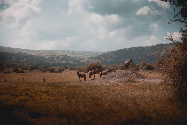 Akagera National Park, Rwanda, Africa