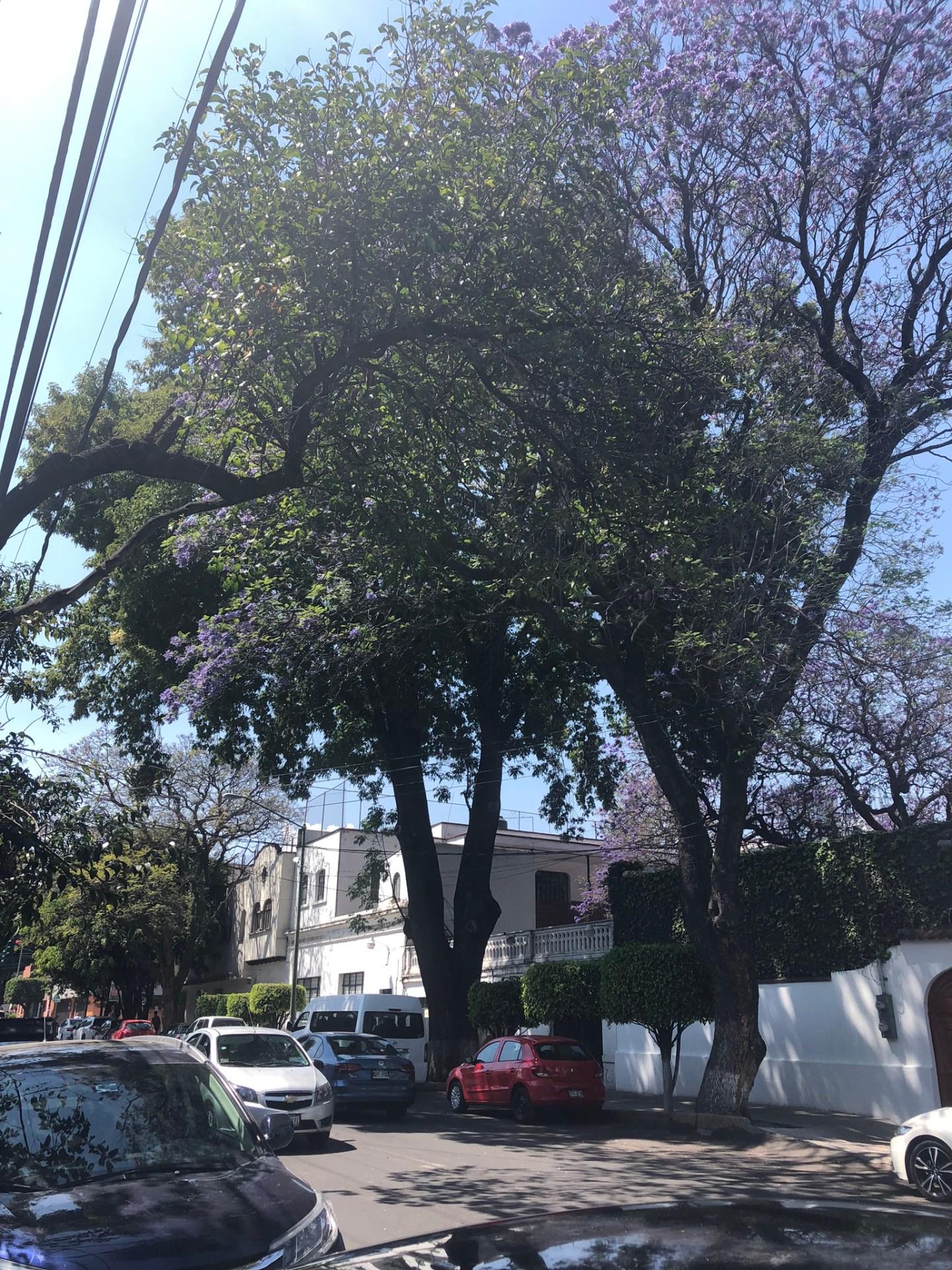 Coyoacan neighbourhood, Mexico City