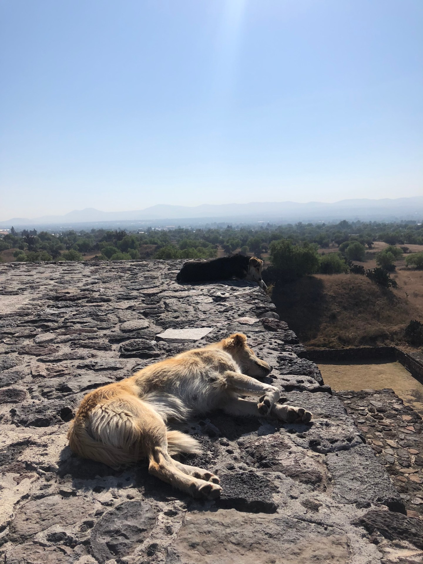 Dogs asleep in the sun on the Pyramid of the Moon