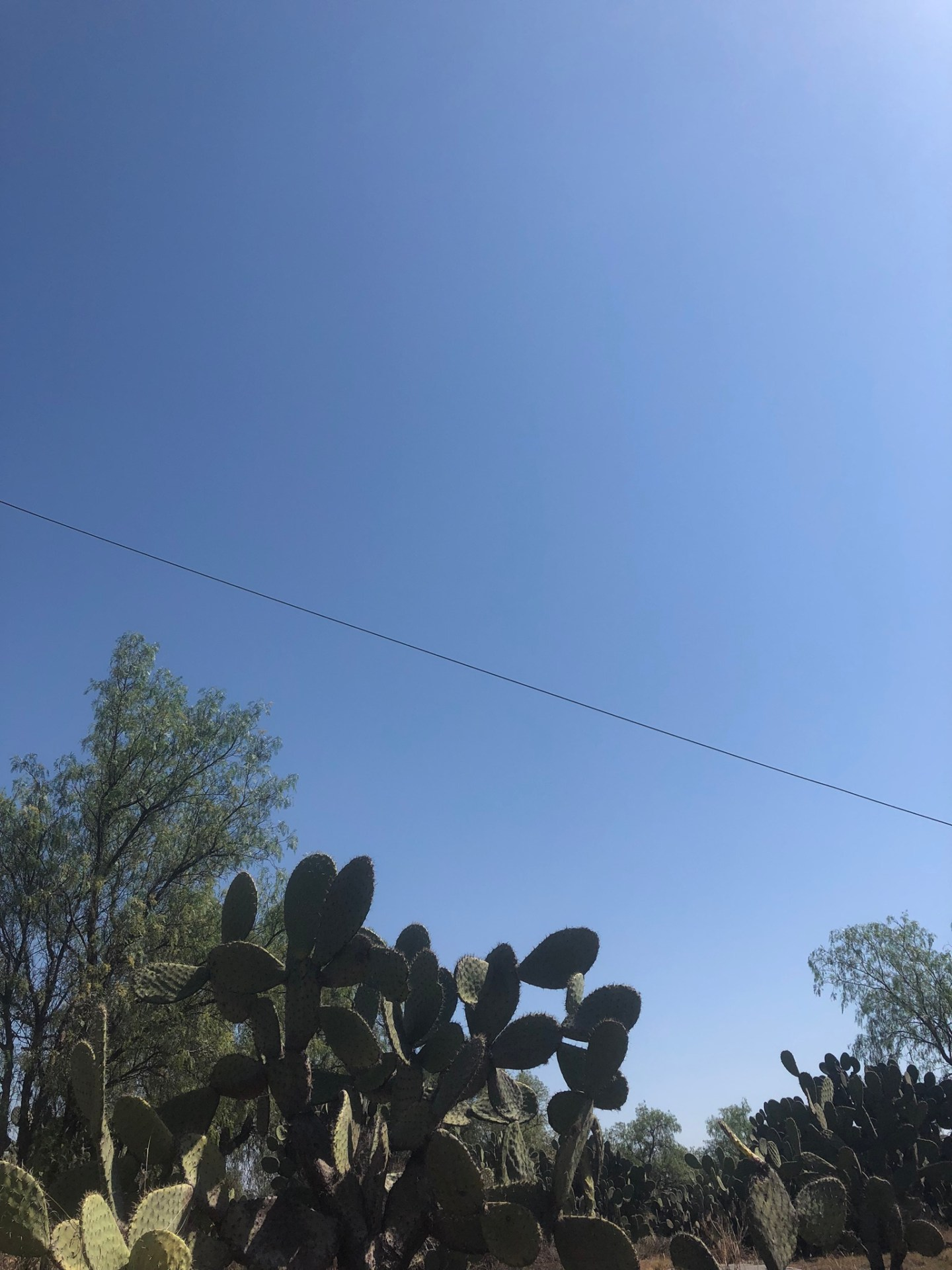 Cacti in Mexico