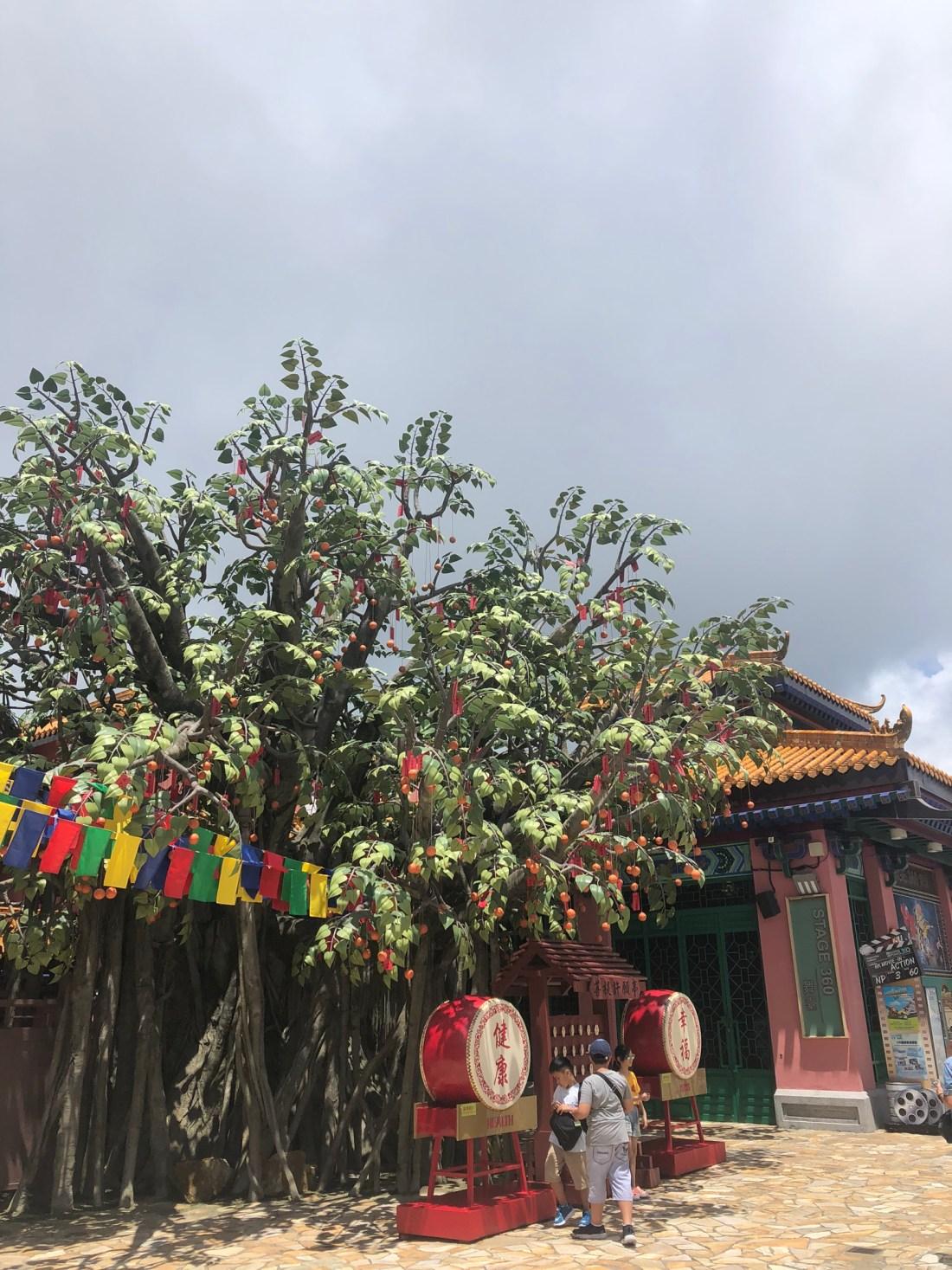 Bodhi Tree, Ngong Ping village, Lantau Island