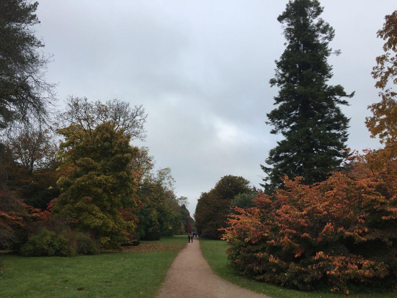 Walking through Westonbirt Arboretum