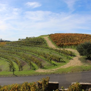 Napa Valley Food and Wine Guide