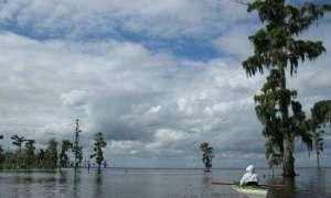 Luizjana traci co godzinę powierzchnię wielkości boiska do piłki nożnej