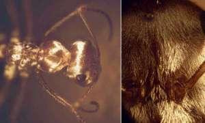 Matka Natura zadziwia. Jak mrówki potrafią przeżyć w gorącu Sahary?