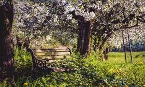 Kobiety – mieszkajcie wśród zieleni a będziecie zdrowsze