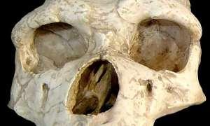 Lenistwo przyczyną wyginięcia Homo erectus?