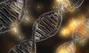 Algorytm analizujący DNA przewidzi Twój wzrost