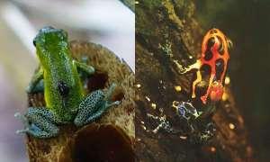 Dlaczego niektóre zwierzęta są monogamiczne a inne nie?