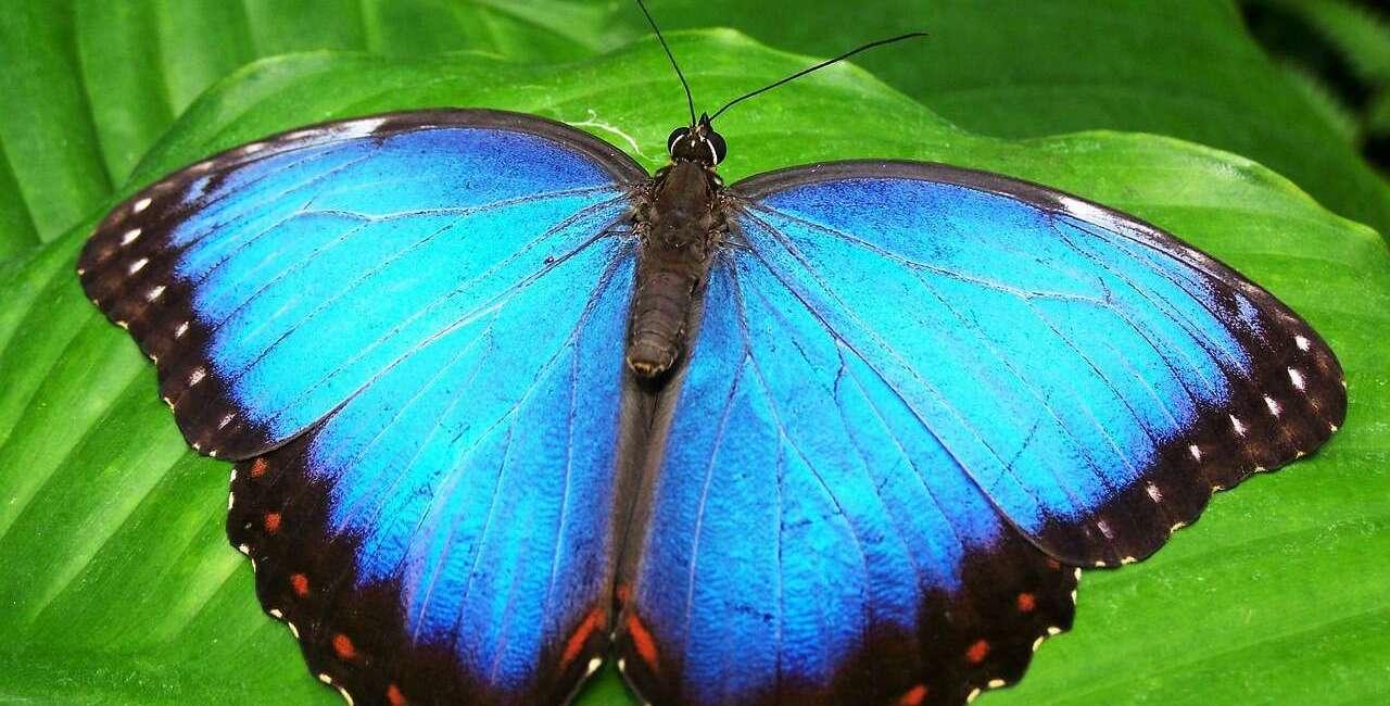 Owady, wyginięcie owadów, zagrożone owady,