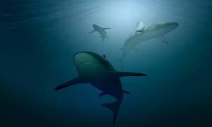 Czy DNA rekina pomoże w walce z rakiem u ludzi?