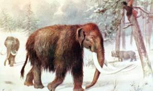 Wskrzeszenie mamuta włochatego coraz bardziej realne