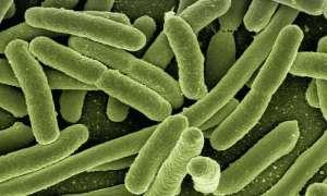 Bakterie mogą stanowić źródło zasilania