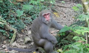 Naukowcy wpływają na mózgi małp dzięki ultradźwiękom
