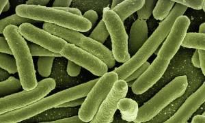 Bakterie w jelitach mogą wpływać na działanie leków
