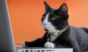 Kot przerwał grę streamerowi, poprzez zwymiotowanie na płytę główną – i to sie nagrało