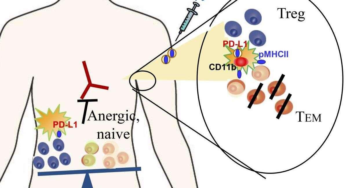 liposomy, tłuszcz, odporność, choroba autoimmunologiczna, leczenie autoimmunologicznej choroby