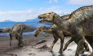 Hadrozaur z Japonii rzuca światło na różnorodność dinozaurów