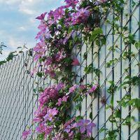 Harmony on the Fence