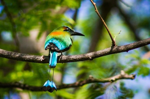 What Is The National Animal of El Salvador?