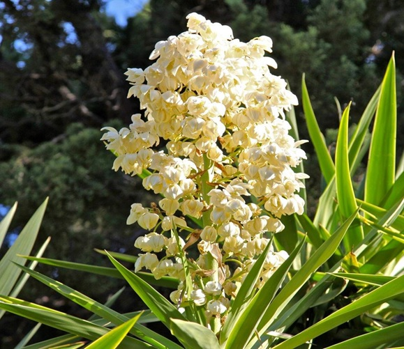 What is The National Flower of El Salvador?