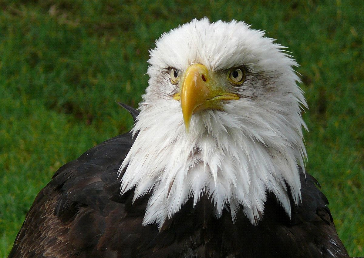 What is the National Bird of Armenia?