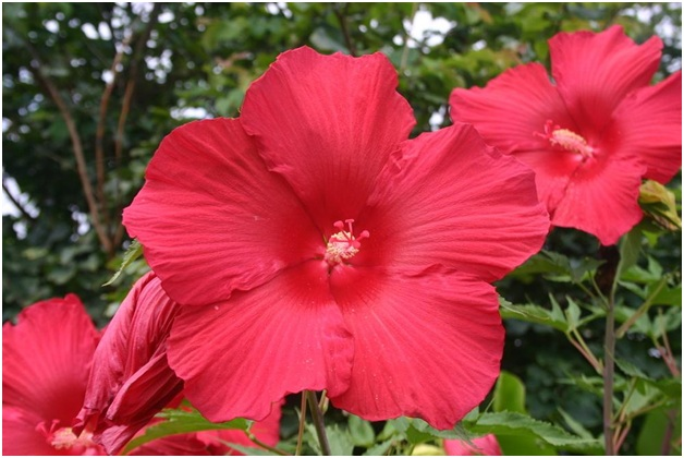 What Is The National flower of Vanuatu?